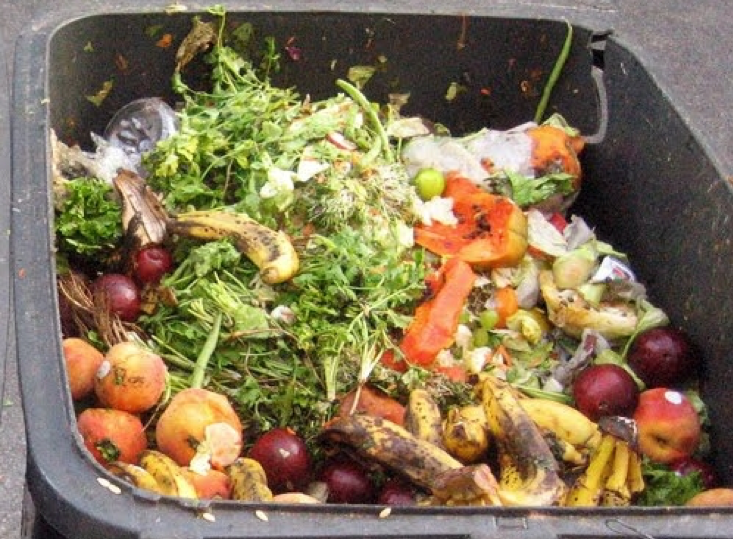 food waste in a food waste recycling bin